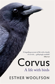 Image of Corvus