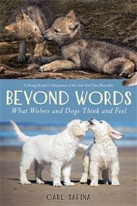 Carl Safina: Beyond Words: What Wolves and Dogs Think and Feel (A Young Reader's Adaptation)