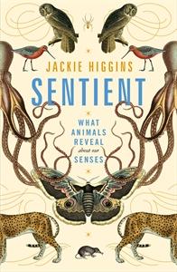 Jackie Higgins: Sentient